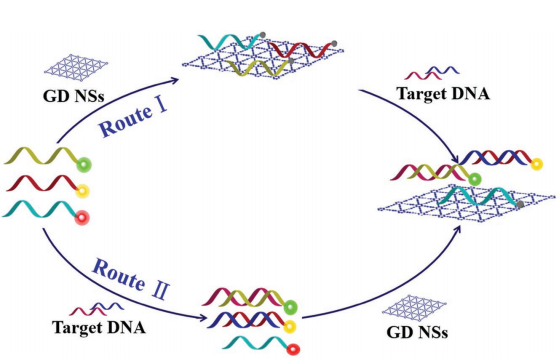 Few-Layer Graphdiyne Nanosheets Applied for Multiplexed Real-Time DNA Detection