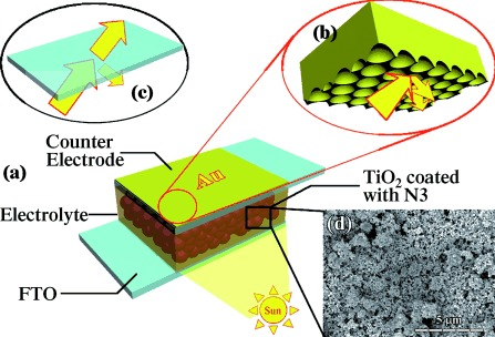 Enhanced Light Harvesting in Plasmonic Dye‐Sensitized Solar Cells by Using a Topologically Ordered Gold Light‐Trapping Layer