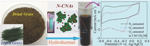 Hydrothermal Transformation of Dried Grass into Graphitic Carbon‐Based High Performance Electrocatalyst for Oxygen Reduction Reaction